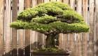 درختی که می توان به آن لقب جان سخت را داد (عکس)