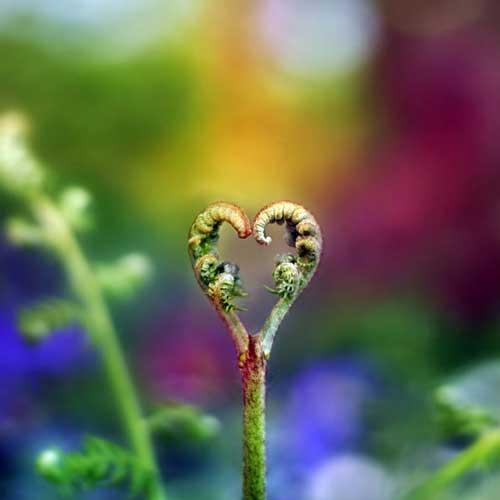 عکس های فوق العاده عاشقانه