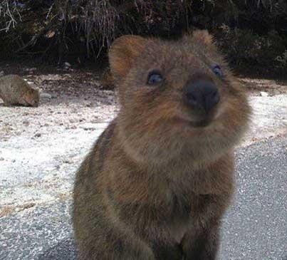 خوشحال ترین و بانمک ترین حیوان دنیا (عکس)