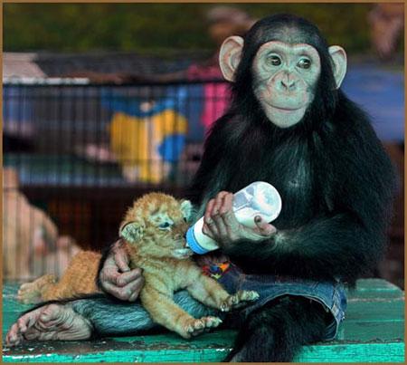 این حیوانات سرشار از هوش و استعداد هستند (عکس)