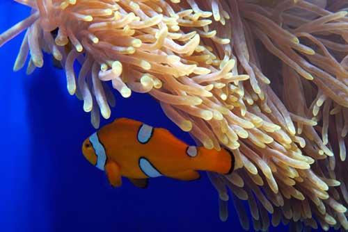 عکس های زیبا و خارق العاده از عجایب اقیانوس ها