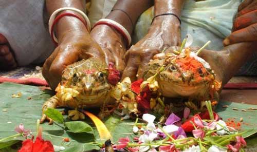 عروس و داماد قورباغه ای با ساقدوش انسان (عکس)