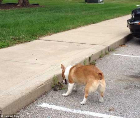 سگی که مادر خوانده شد (عکس)