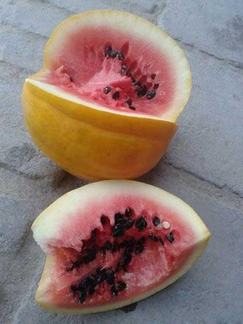 رشد هندوانه عجیب الخلقه در ایران (عکس)