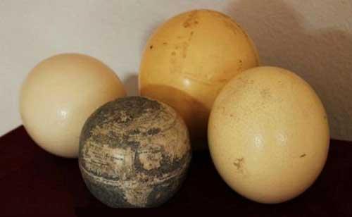 جهان دیگر سوار بر پوست تخم شتر مرغ است (عکس)