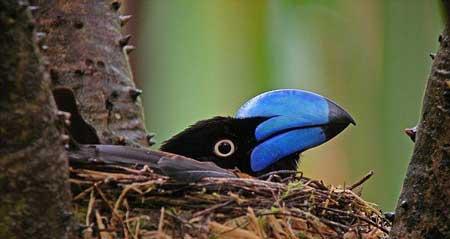 اوج زیبایی خلفت خداوند در این پرندگان