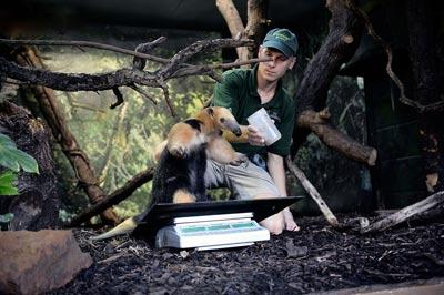 چگونگی اندازه گیری حیوانات باغ وحش (عکس)