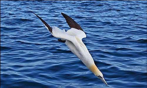 این پرنده لقب سریعترین را به خود اختصاص داد (عکس)