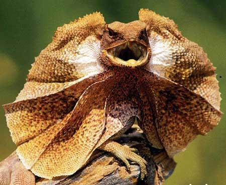 گونه های زشت و عجیب حیوانات نادر (عکس)