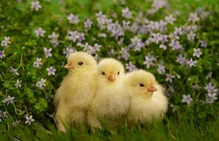 عکس حیوانات  زیبا