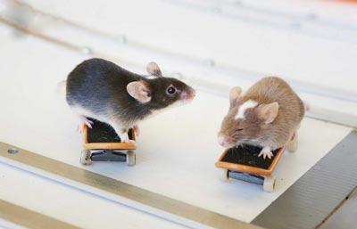 موش های باهوش با مهارت اسکی بازی حرفه ای