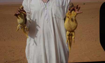 عکس های چندش آور از سوسمار خوردن عرب ها