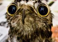 پرنده ای بسیار زشت و ناشناخته (عکس)