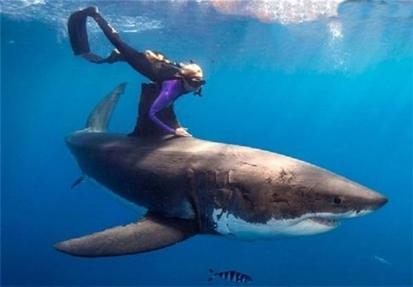 زنی جسور که با کوسه های خون خوار شنا میکند (عکس)