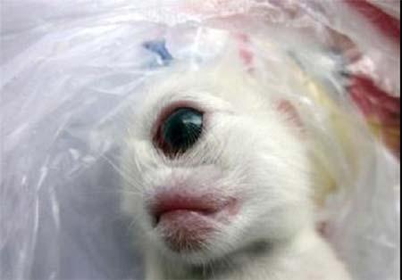 0.372094001378498681 parsnaz ir عکس  تولد بچه گربهای با یک چشم