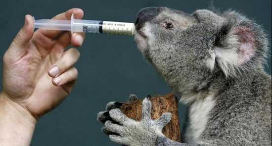 عکس های جالب از معاینه حیوانات