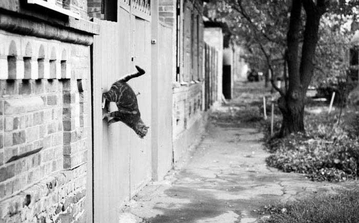تصاویر خنده دار و جالب از شکار لحظه ها