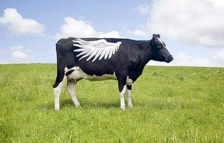 گاوهای باحالی که تاتو کرده اند (عکس)