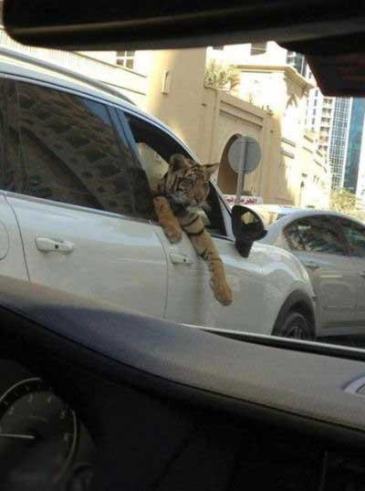 خنده دار ترین عکس ها از عرب های دوبی