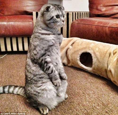 گربه ای که انگار زاده انسان است (عکس)
