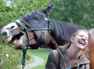 عکس های دیدنی از بازیگوشی حیوانات