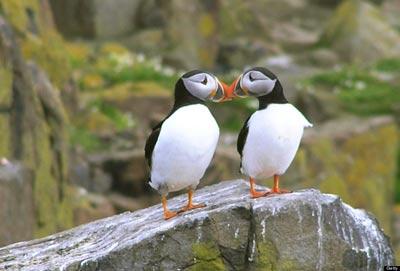 عشق و علاقه دیدنی در بین حیوانات (عکس)