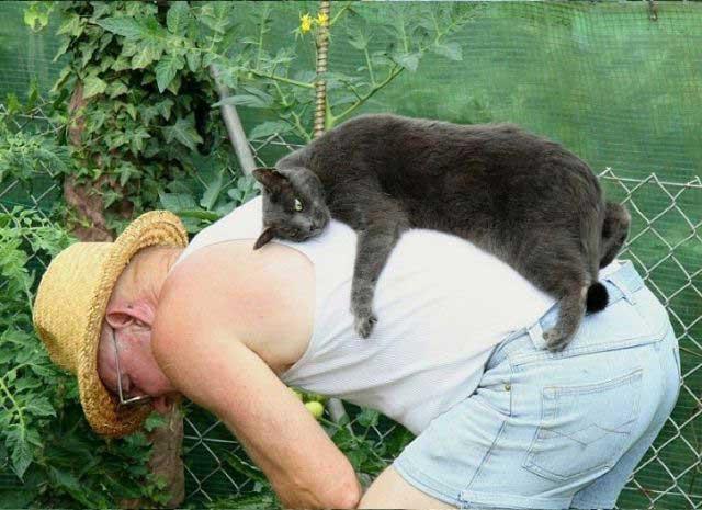 کارهای خنده دار و عجیب از حیوانات (عکس)
