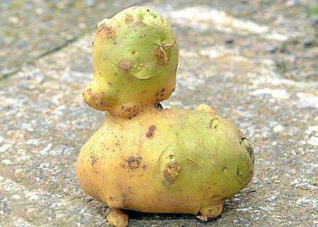سیب زمینی باحالی که نماد یک روستا شد (عکس)