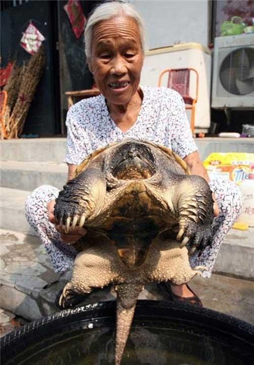 کشف عحیب لاکپشت پیر زنده ۵۰۰ ساله (عکس)