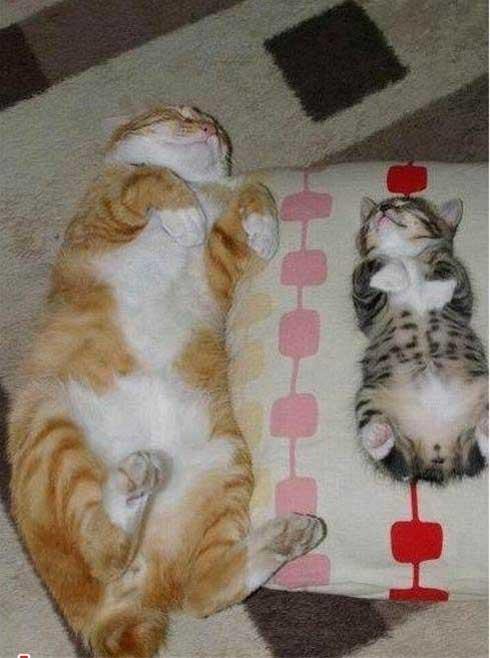 تصاویر خنده دار و باحال از گربه های خسته