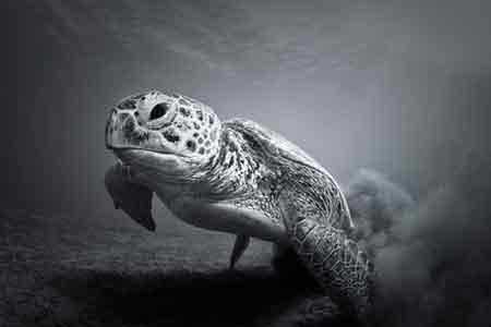 ژست های دیدنی و جالب جانوران (عکس)