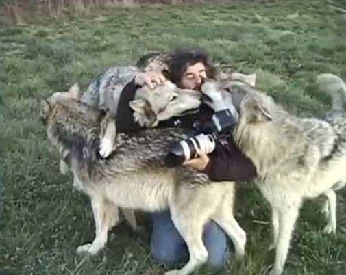 ارتباط باور نکردنی گرگ ها با این مرد (عکس)