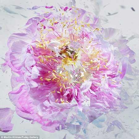 عکس های مدرن از لحظه شلیک به گلهای یخ زده
