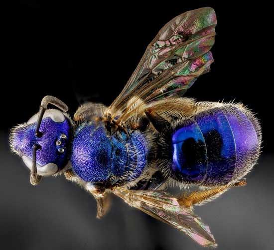 زنبورهای عجیب شیشه ای (عکس)
