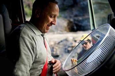 همستر شگفت انگیزی که رانندگی می کند (عکس)