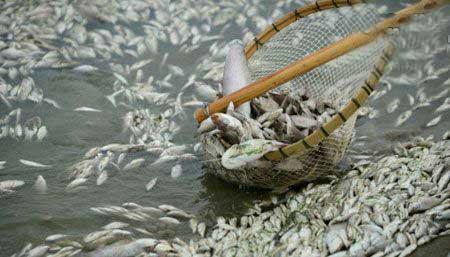 عکس های تکان دهنده ازآلودگی رودی در چین