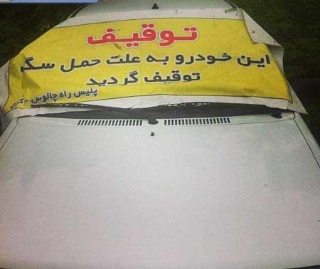 سوژه های باحال ایرانی (عکس)