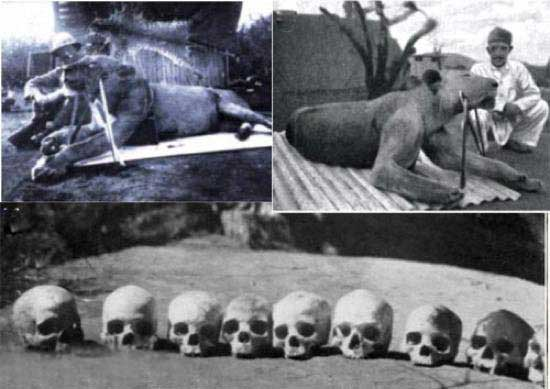 ترسناک ترین آدمخورها در دنیا (عکس)