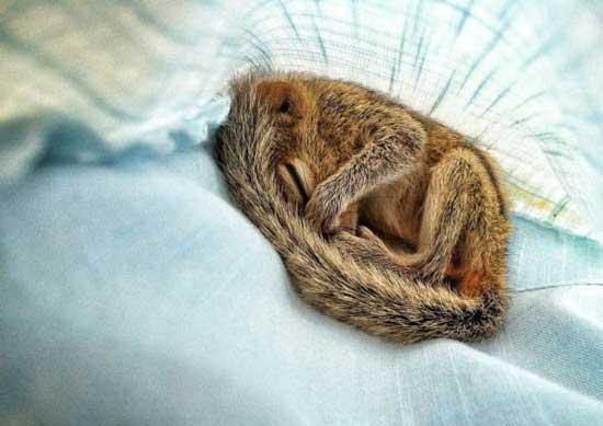 تصاویر تماشایی از بچه سنجاب باحال (عکس)