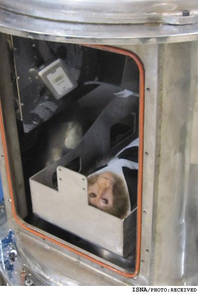 آموزش 5 میمون فضانورد ایرانی..(عکس)