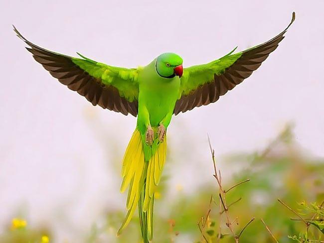 تصاویر زیبا ترین پرندگان از گوشه و کنار دنیا..!