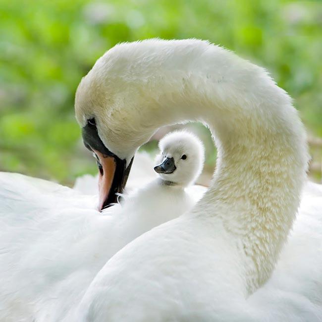 تصاویر زیباترین پرندگان از گوشه و کنار دنیا