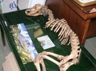 تصاویر دایناسورها در ایران..