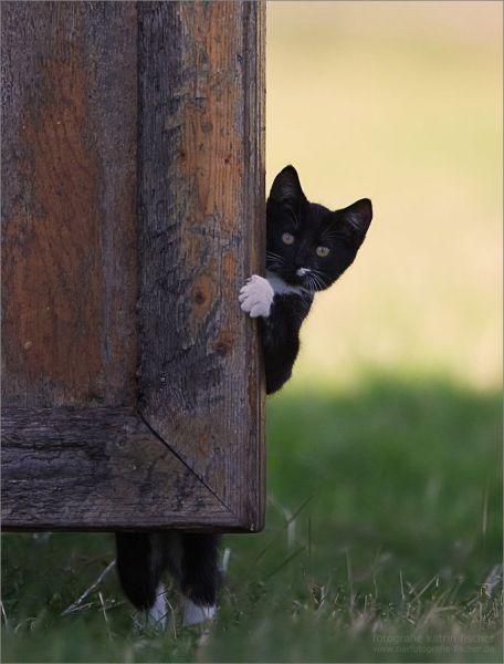 عکس های بسیار بامزه و جالب از حیوانات