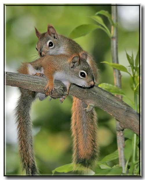 عکس دیدنی سنجابی در حال مطالعه