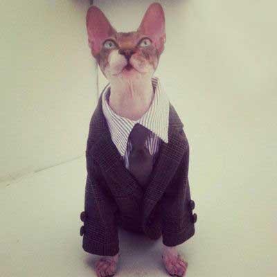 گربه های فشن در فشن شوی (عکس)