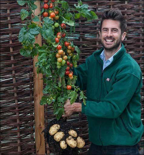 عجیب ترین پیوند گیاهی در دنیا (عکس)