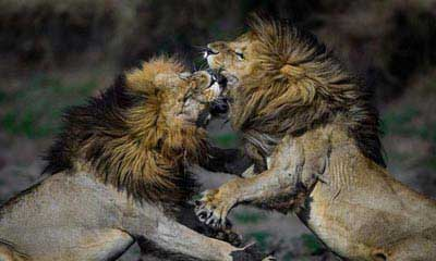 تصاویر وحشی از قلمرو حیوانات