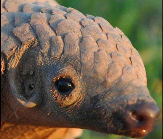 بامزه ترین حیوان جهان (عکس)
