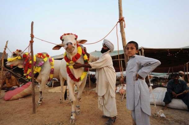 عکس هایی از آماده شدن کشورها برای عید قربان 92
